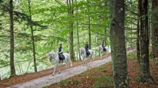 vídeos de stock, filmes e b-roll de ts três povos que montam cavalos na estrada de floresta - montar um animal