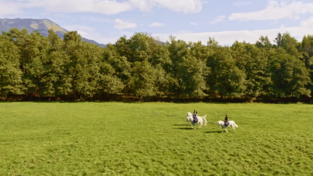 aerial three people riding running white horses across meadow - horseback riding stock videos & royalty-free footage