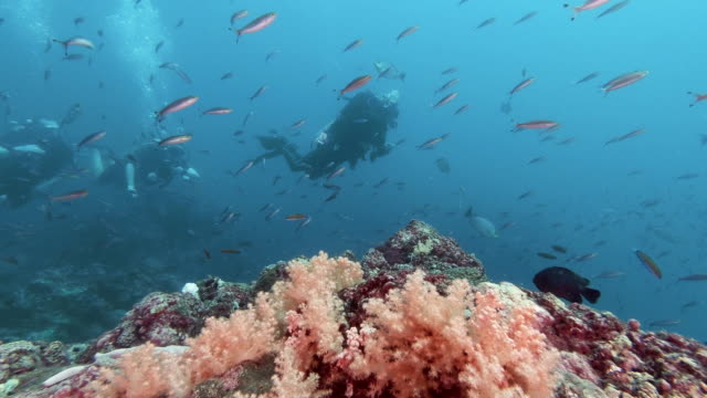three people scuba diving on beautiful colorful pink underwater tropical coral reef - andaman sea stock videos & royalty-free footage