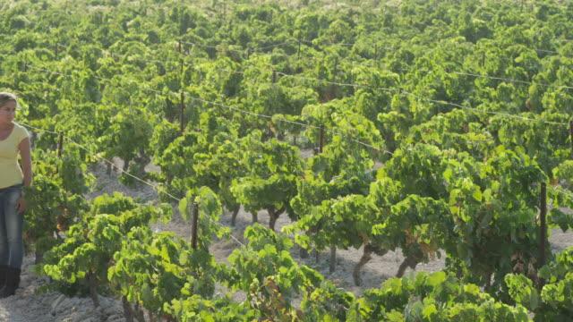 stockvideo's en b-roll-footage met ws pan three people standing in vineyard / near jerez de la frontera, andalusia, spain - haar naar achteren