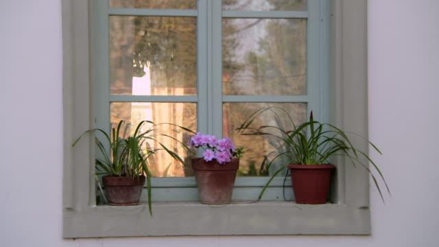 three pot plants on windowsill - houseplant stock videos and b-roll footage