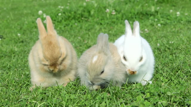 vidéos et rushes de three rabbits sitting on grass, cleaning themselves - petit groupe d'animaux
