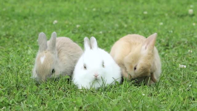 vidéos et rushes de three rabbits sitting on grass eating - petit groupe d'animaux