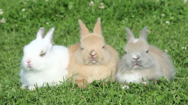 vidéos et rushes de three rabbits sitting on grass - petit groupe d'animaux