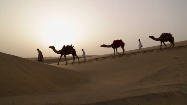 vidéos et rushes de three rajasthani men walking on desert, sam desert, jaisalmer, rajasthan, india - trois animaux