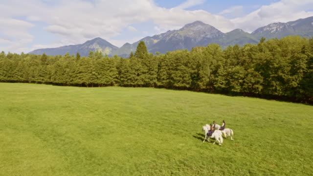 vídeos y material grabado en eventos de stock de aerial tres jinetes montando caballos blancos a través de una pradera - small group of animals