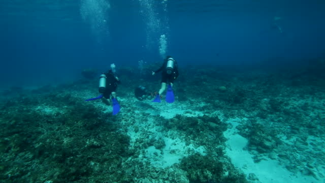 stockvideo's en b-roll-footage met three scuba divers swimming - duikfles