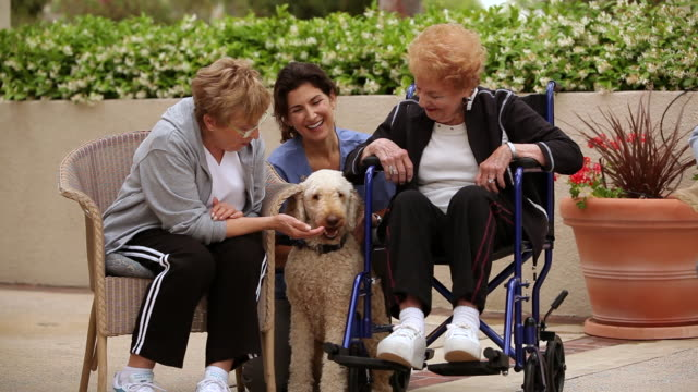 """ms three senior citizen and a care giver plying with dog / laguna woods, ca, united states"" - caretaker stock videos & royalty-free footage"