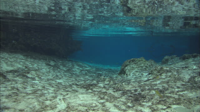 Three Sisters Spring Crystal River, Florida, North Atlantic Ocean