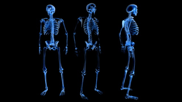 Three skeletons in an X-ray view on a black background with the middle of the three rotating fully in an anti-clockwise motion. The left skeleton is of an anterior view and the right is of a lateral v