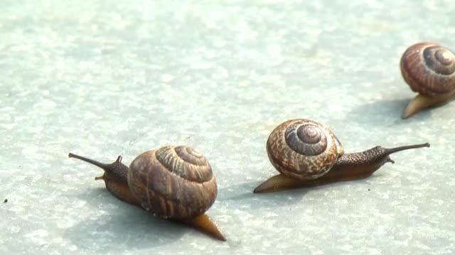 three slugs