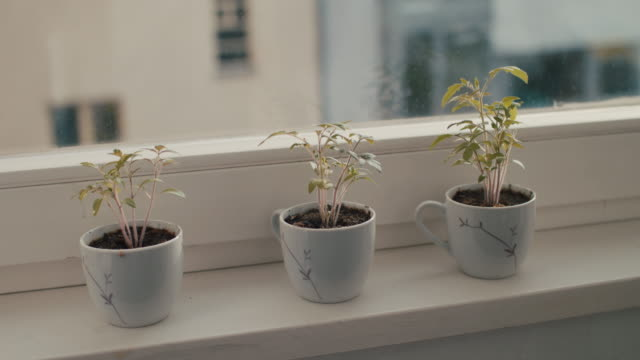vídeos de stock, filmes e b-roll de three small house plants growing in mugs - planta nova