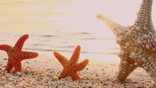 ms, zi, three starfishes on beach, florida, usa - small group of objects stock videos & royalty-free footage