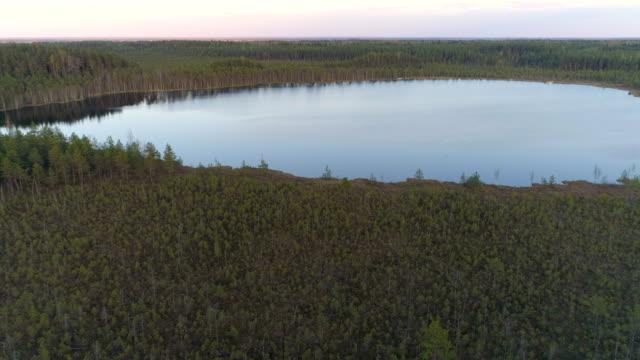 Three swans landing on a lake Teirumnieki at a spring in Latvia