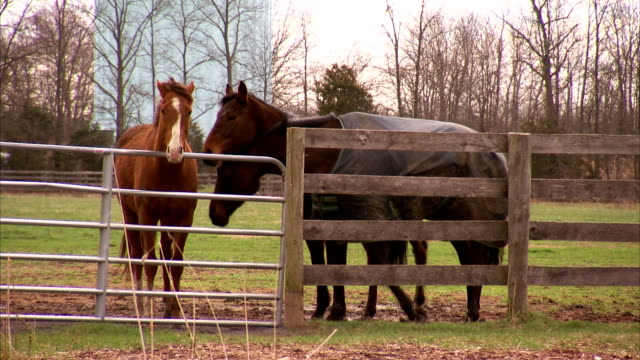 hd ws three thoroughbred horses w/ one brown wearing horse blanket all standing behind metal gate and wooden paddock fencing brown sniffing back of... - horse blanket stock videos & royalty-free footage