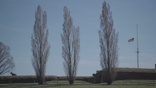 three trees blow in the wind during the covid-19 pandemic on march 26, 2021 in baltimore, maryland. there have been 2 170 covid-19 vaccines... - small group of objects stock videos & royalty-free footage