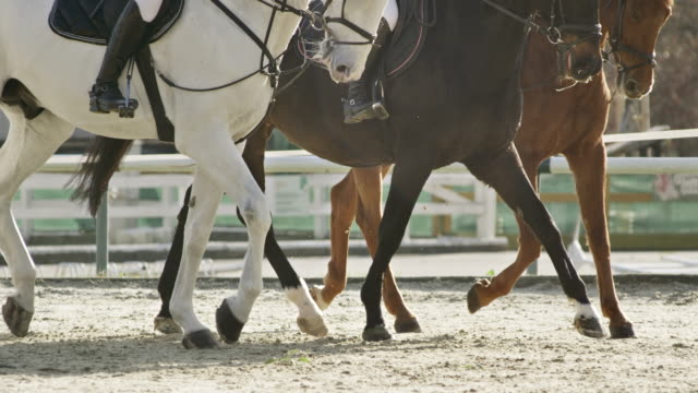 slo mo ts three trotting horses in a sunny arena - bridle stock videos & royalty-free footage
