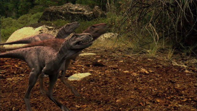 cgi, ms, three tyrannosaurus rex babies - paleozoology stock videos and b-roll footage