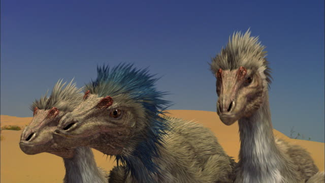 CGI, CU, Three Velociraptors on sand dune