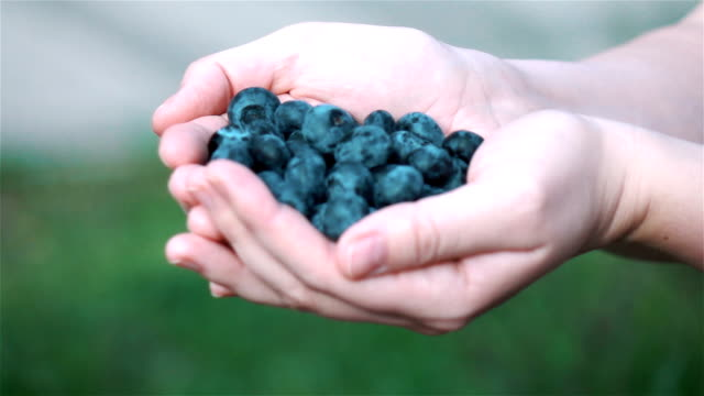 three videos of hands holding blueberries in real slow motion - scooping stock videos & royalty-free footage