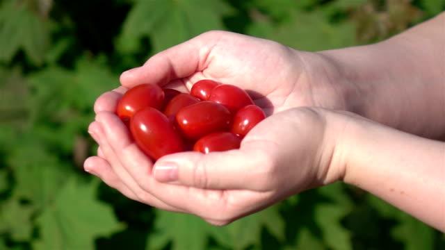 Drei videos von Hände holding Kirsche Tomaten -real Zeitlupe