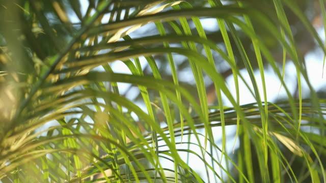 vídeos de stock, filmes e b-roll de três vídeos de palmeira em 4 k - coco