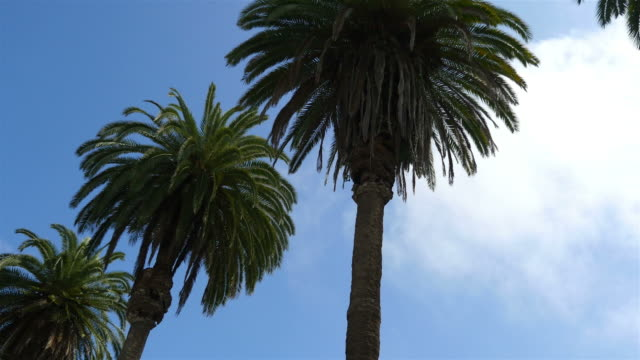 three videos of palm tree street in 4k - san diego stock videos & royalty-free footage