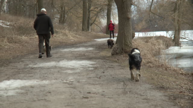 MS TU Three wet dogs walking with owner on trail at high park in winter / Toronto, Ontario, Canada