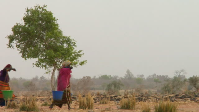 vídeos de stock e filmes b-roll de ws, three women carrying water through arid area, niamey, niger - plano geral