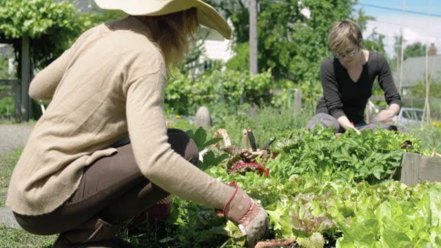Three women gardening