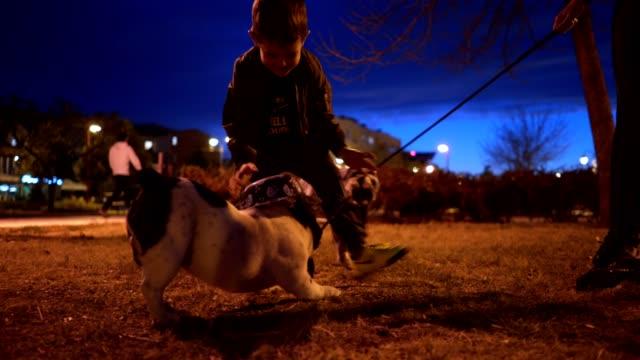 vídeos y material grabado en eventos de stock de niño de tres años jugando con su perro - perro cazador