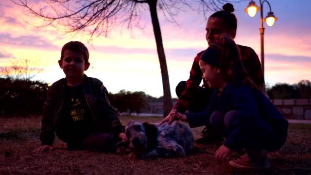 vídeos y material grabado en eventos de stock de tres años de edad jugando con un setter inglés en el parque - perro cazador
