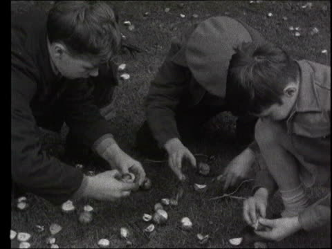 ban lib ts three young boys stringing up conkers ms two young boys playing conkers - cub scouts stock videos and b-roll footage