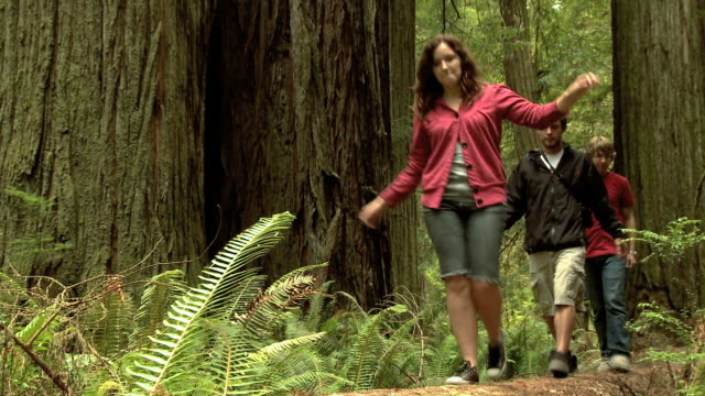 vídeos y material grabado en eventos de stock de three young people walking on a log in a forest of giant sequoias - parque estatal