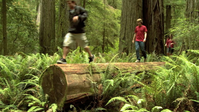 three young people walking on a log in a forest of giant sequoias - giant sequoia stock videos and b-roll footage