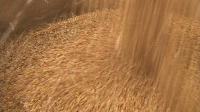 threshing wheat by machine, kagawa, japan - threshing stock videos & royalty-free footage