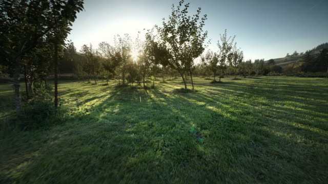 POV through apple orchard on Organic Farm
