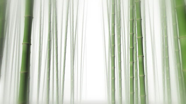 stockvideo's en b-roll-footage met through bamboo forest - bamboo plant