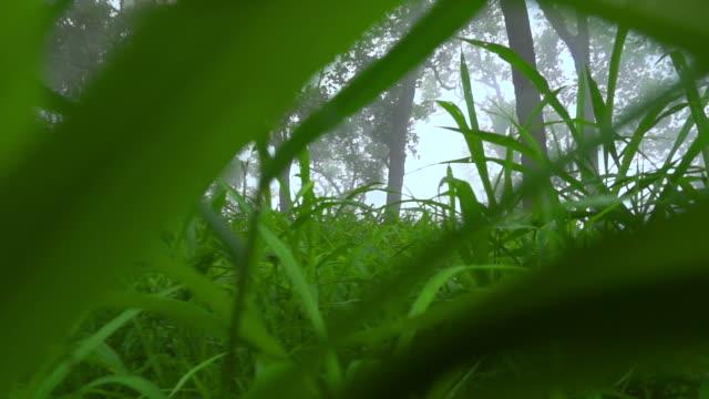 Through Grass Field Slow