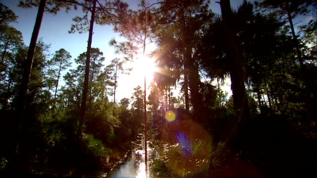 DRIVING through green woods over small creek PAN passing plants grass cabbage palm trees blue sky Golf course subtropical forest woodland water...