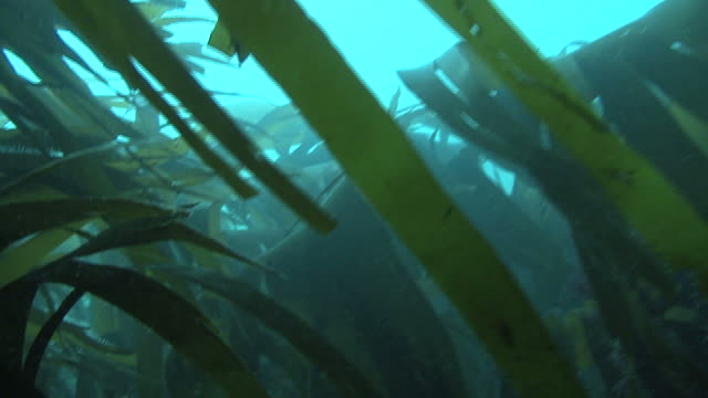 pov through kelp, guernsey, english channel, uk - guernsey stock videos & royalty-free footage