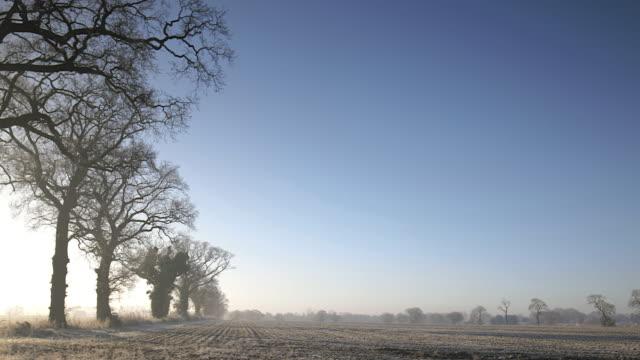 vídeos de stock, filmes e b-roll de pov through right side of moving vehicle, frosty field and bare trees - ponto de vista de carro