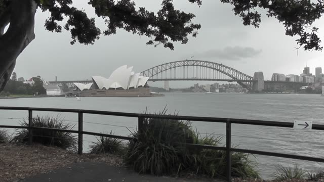 through trees on a rainy overcast day - bennelong point stock videos and b-roll footage