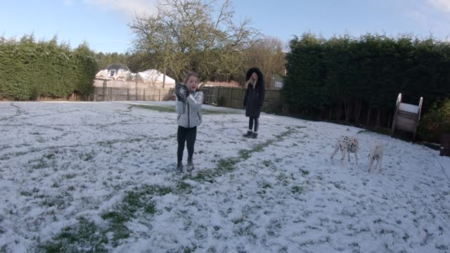 throwing a snowball - dalmatian dog stock videos and b-roll footage
