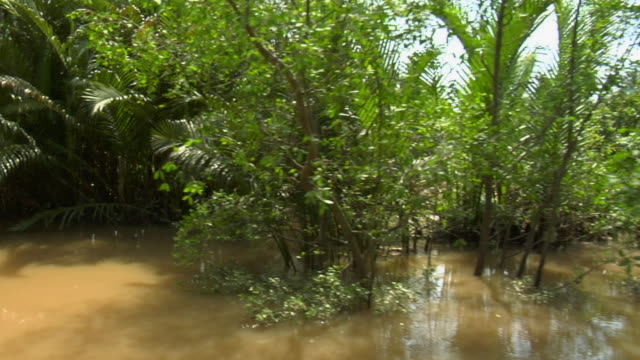 pov thru mangrove palms and other vegetation along backwater in mekong delta / vietnam - backwater stock videos & royalty-free footage
