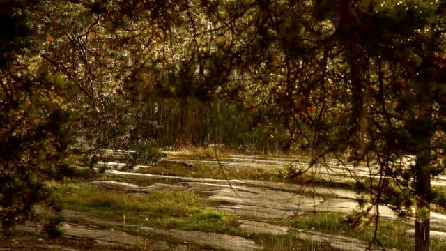 Thunder de soleil et la pluie fine