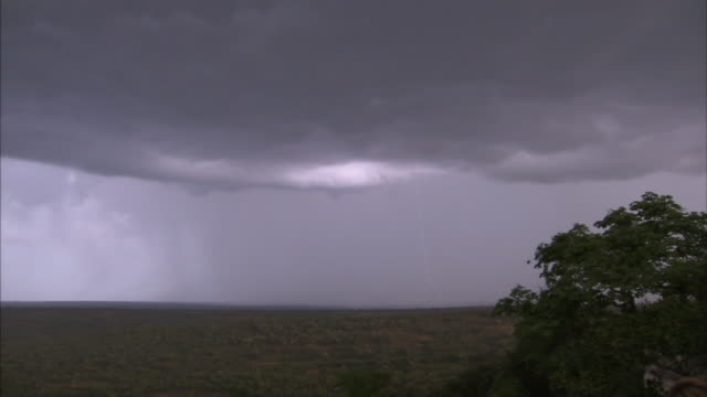 a thunderstorm moves across an african savanna. - horizont stock-videos und b-roll-filmmaterial