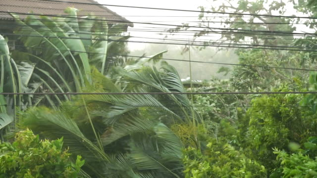 thunderstorms in thailand. - torrential rain stock videos and b-roll footage