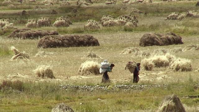 Tibetan Women Working Hard, On Cell Phone