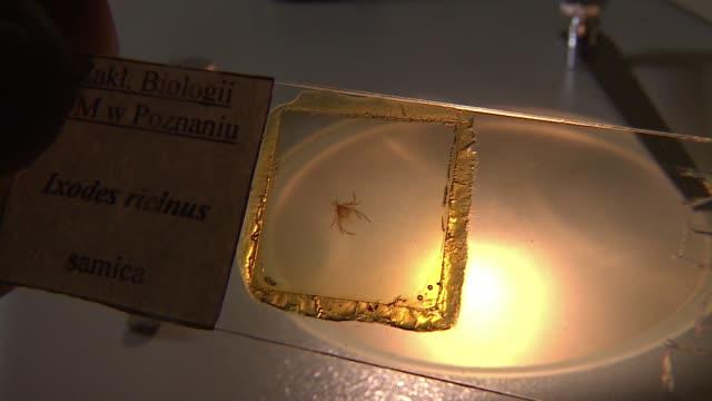 tick on microscope glass - wirbelloses tier stock-videos und b-roll-filmmaterial